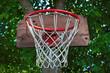 Closeup of a basketball hoop on a tree