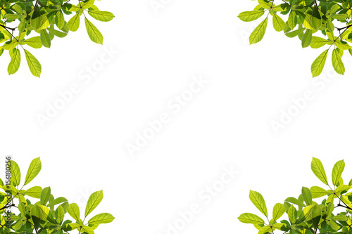 Fotobehang Abstractie Green leaves frame isolated on white background