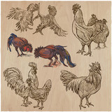 Poultry - An hand drawn vector pack. Freehand sketching. - 156182097