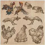 Poultry - An hand drawn vector pack. Freehand sketching. - 156182430
