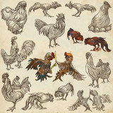 Poultry - An hand drawn full sized pack. Freehand sketching on old paper. - 156182644