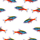 Seamless pattern with tropical neon tetra. Watercolor illustration with hand drawn aquarium exotic fish on white background.