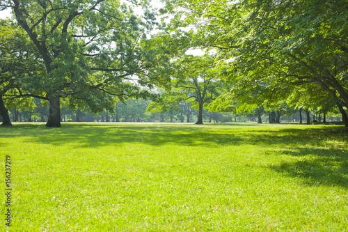 Fotobehang Lime groen 公園 芝生