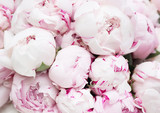White and pink peonies. Background, wallpaper - 156245608