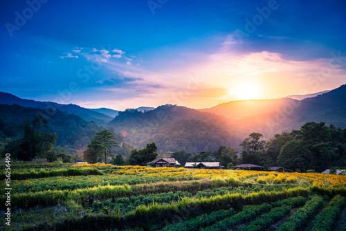 Poster Water planten Yellow Flower Field Evening sunset. flower garden. Yellow flower field marigold