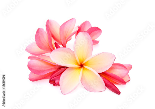 Canvas Plumeria frangipani (plumeria) isolated on white background