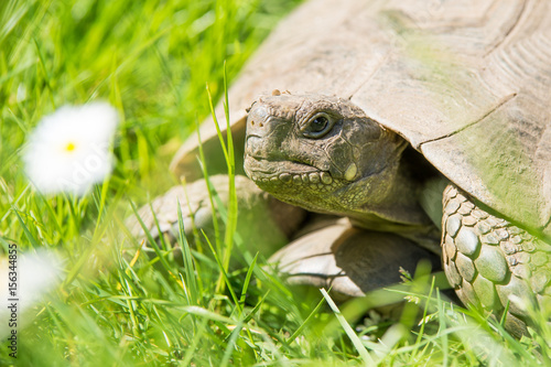 ritratto tartaruga Poster