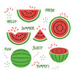 Green and red whole and sliced juicy summer watermelon icons set on white background - 156351819