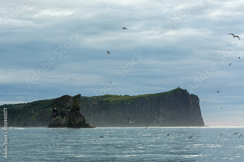 Bird market on sea stack Three brothers in Avacha Bay. Poster