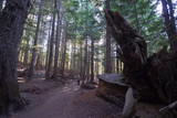 Old forest with footpath with fallen trees and roots