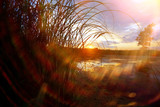 Grass near the water at sunset