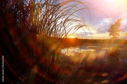 Foto op Plexiglas Bruin Grass near the water at sunset