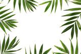 beautiful palm leaves - 156565685
