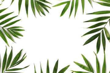 beautiful palm leaves