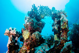 Coraya Bay house reef