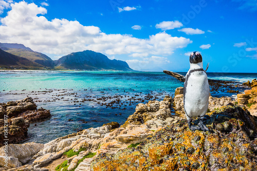 Fotobehang Pinguin The boulders and algae