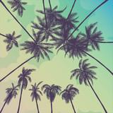 summer palm trees california - 156881618