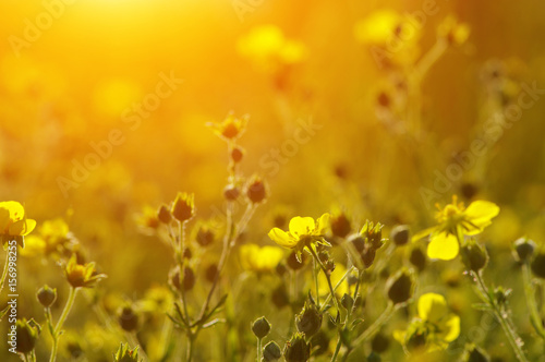 Spring flowers on sun Poster