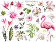 Tropical Collection with plants elements - leaf, flowers. Botanical illustration isolated on white background. watercolor nature. Exotic set with Flamingo, palm, wild orchid, butterfly.