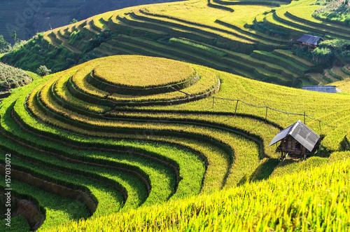 Papiers peints Jaune Rice fields on terraced of Mu Cang Chai, YenBai, Vietnam. Rice fields prepare the harvest at Northwest Vietnam
