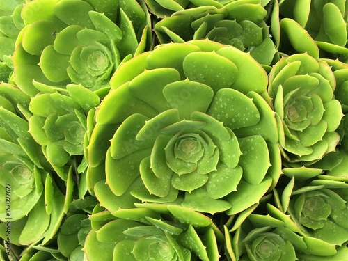 Fotobehang Planten Succulents