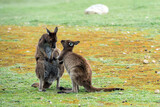 Kangaroo mother while kissing newborn son