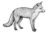 Fox illustration, drawing, engraving, ink, line art, vector - 157128896