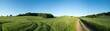 Quadro  Panorama summer green field landscape with dirt road