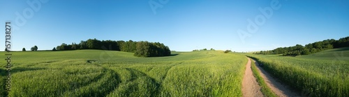 Fotobehang Lente Panorama summer green field landscape with dirt road