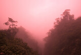 The fog in the jungles of Ecuador, the silhouette of the trees. Sunset