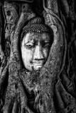 buudha of Ayutthaya