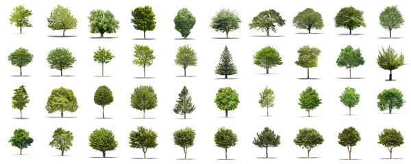 High definition collection Tree isolated on a white background