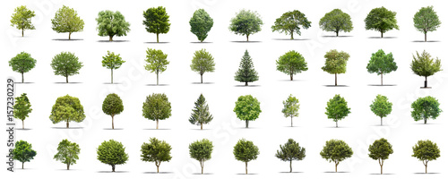 High definition collection Tree isolated on a white background - 157230229