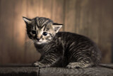 small kitten on background of old wooden boards