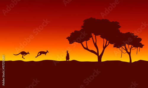 At sunrise kangaroo scenery silhouettes
