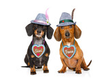 bavarian beer dachshund sausage dogs , couple of two