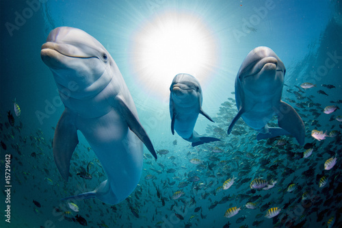 dolphin family underwater on reef close up look