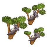 Funny koala bears sleeps on trees. Vector animals