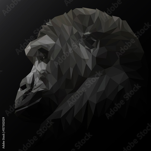 Chimpanzees low poly design. Triangle vector illustration. © shekularaz