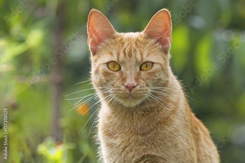 Katze schaut neugierig