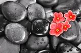 Set of violet flowers on pebble