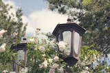 Old street candelabras, lantern with wild roses and sky background. Vintage photo