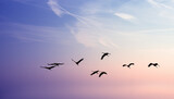 Birds flying against evening sunset environment or ecology concept - 157347439