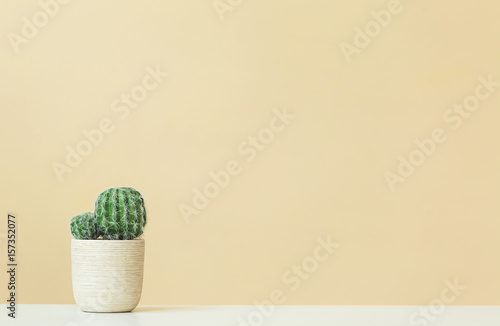 Foto Murales Cactus on a yellow background