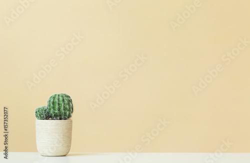 Kaktus na żółtym tle