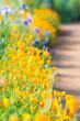 花畑の小道