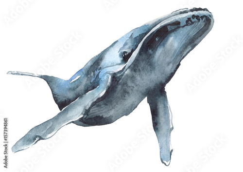 watercolor illustration of a blue whale - 157394861