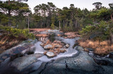 Landscape with pine forest and stones at evening in coastline, Finland