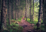 Idyllic landscape with path and primeval forest at summer morning