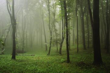 natural green misty forest landscape background